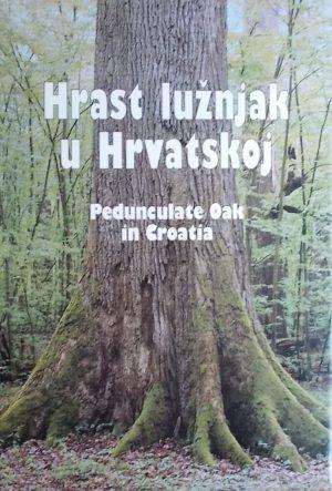 Hrast lužnjak u Hrvatskoj