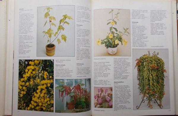 Wickham: Kućne biljke (2)