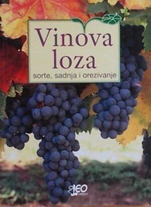 Vinova loza: sorte, sadnja i orezivanje